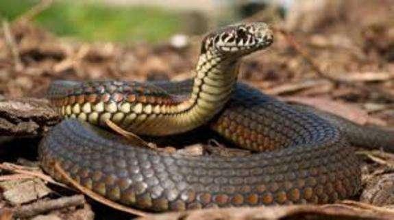 В одному з сіл Львівщини чоловіка укусила змія