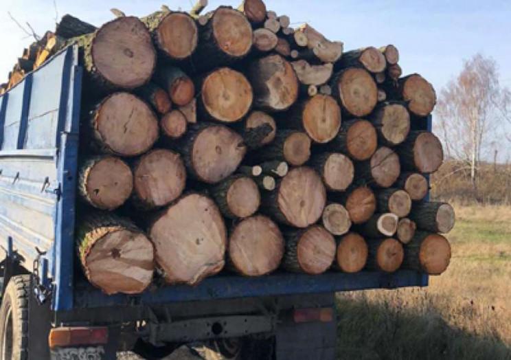 Розкрадання віковічних дубів на Дрогобиччині на понад 700 тисяч гривень викрила СБУ