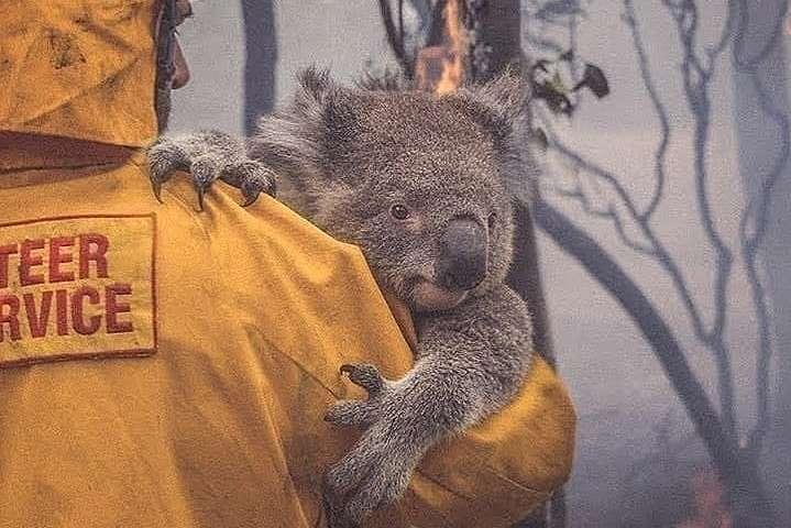 Останні новини з Австралії: кількість загиблих тварин перевищило 1,25 млрд