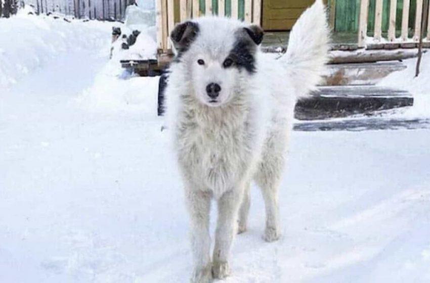 Неймовірна історія: собачка два дні грів своїм тілом 2-річнy дитину, щоб та не замерзла на вулиці