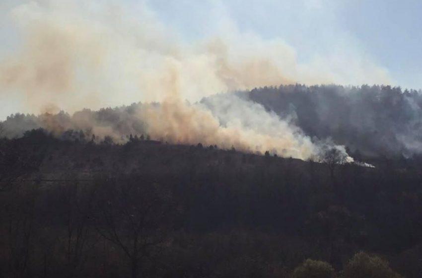 У смт Підбуж горить ліс (ФОТО, ВІДЕО)