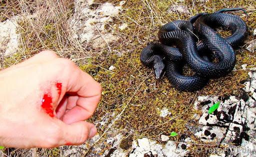 У Дрогобицькому районі через укус змії змії жінка потрапила в реанімацію