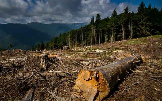 """Закон """"Слуг народу"""" про заборону вирубки лісів тільки спростив їх знищення, – екологи зробили важливу заяву"""