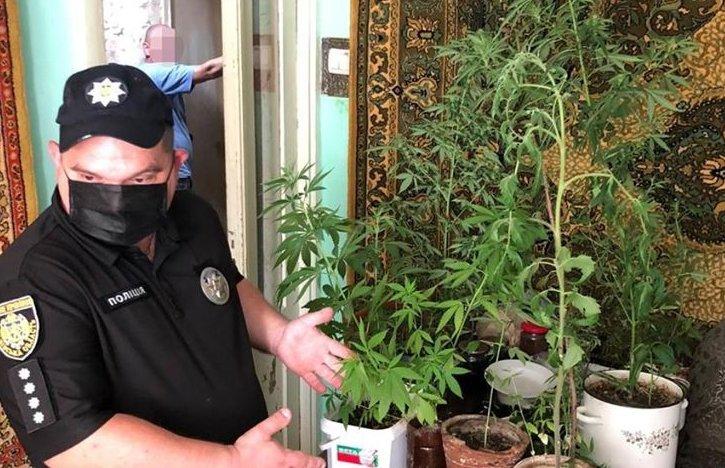 На Дрогобиччині молодий чоловік масово вирощував в квартирі коноплі (ФОТО)