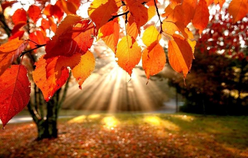 Традиційно осені цього року не буде. Синоптик сказав, до чого готуватися