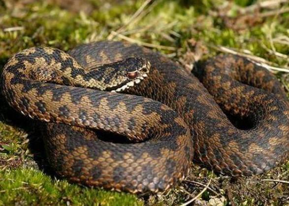 На Львівщині змія вкусила чоловіка у ступню