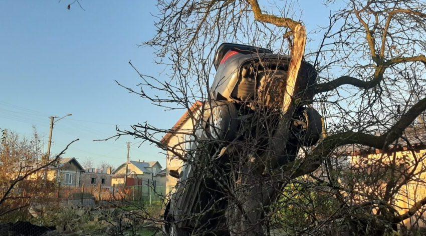 """""""Як це треба було їхати?"""": у Дрогобичі іномарка """"прилетіла"""" на дерево біля приватного будинку (ФОТО)"""