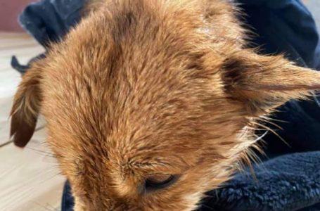 На Дрогобиччині нелюди замотали собаку у мішок і викинули у крижану річку (ФОТО, ВІДЕО)