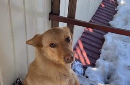 Собака облюбував життя на даху магазина: люди постійно дзвонять надзвичайникам і просять урятувати пса (відео)