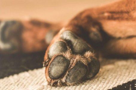 На Львівщині судитимуть чоловіка, який застрелив двох собак (ФОТО)